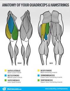 - Ask The Siege: 'What's The Best Way To Build Big Legs?' -- Anatomy of the Legs and how to change their shape - Ask The Siege: 'What's The Best Way To Build Big Legs?' -- Anatomy of the Legs and how to change their shape Leg Anatomy, Muscle Anatomy, Quad Anatomy, Leg Muscles Anatomy, Forearm Anatomy, Anatomy Study, Anatomy Art, Big Muscle Training, Leg Training