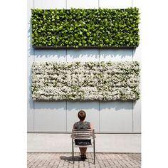 D&M Depot Karoo Verticale Plantenbak 40 x 40 cm Green Facade, Minimalist Garden, Walled Garden, Vertical Gardens, Green Architecture, Garden Living, Plant Wall, Garden Spaces, Garden Inspiration