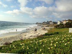 Windansea Beach in La Jolla, CA
