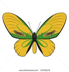 vector illustration of beatiful butterfly