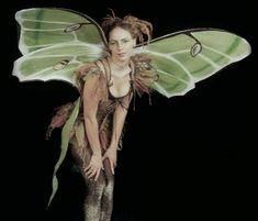 #Luna_Moth #Fairy (What my inner fairy looks like...). how cool is this!!!