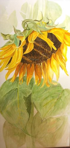 Original Watercolor Painting  Sunflower  Sunshine by sagewest, $650.00