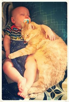 That cat has the cutest pet baby. http://ift.tt/1RPHLov
