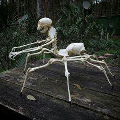 34 Stunning Outdoor Halloween Decor Ideas With Skeletons Halloween Skeletons, Scary Halloween, Fall Halloween, Halloween Crafts, Halloween Decorations, Arte Horror, Horror Art, Cincinnati, Animal Bones