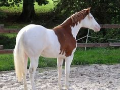 I think this is Titan from Downunder Horsemanship, but I'm not sure. Either way, he's stunning!
