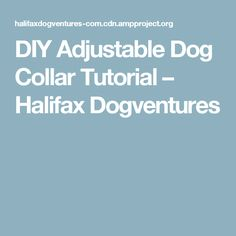 DIY Adjustable Dog Collar Tutorial – Halifax Dogventures