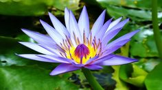 Top 10 Colorful Water Lilies Ever You Seen | Amazing Flowers Video(HD)