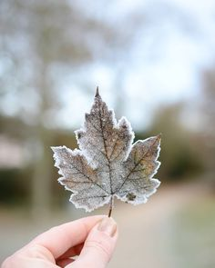 Virgo in winter ♈/ ♉/ ♊/ ♋/ ♌/ ♎ /♏/ ♐/ ♑/ ♒/ ♓ Ice Ice Baby, Winter Christmas, Christmas Time, Winter Leaves, Hand Photography, Autumn Aesthetic, Jack Frost, Winter Time, Wonderful Time