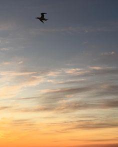 #scottland #kraken field #offshore #wish #you #all #a #fantastic #morning #segals #colors #sunset makes people happy #night #shift #exploringglobe #landscapeofnorway #nrkvestfold #nortrip #dreamchasersnorway #offshorelife #northseagigant #vessel #gladfjes av soloppgang også  by siv_lea