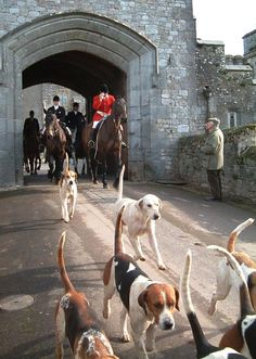 Fox hunting in England Equestrian Outfits, Equestrian Style, English Country Manor, English Countryside, British Country, English Style, Art Beagle, Fox Hunting, Hunting Party