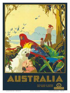 Google Image Result for http://imgc.allpostersimages.com/images/P-473-488-90/62/6226/ZY73100Z/posters/james-northfield-australia-parrots-c-1930-s.jpg