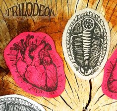 Trilobite Fossil Anatomical Heart Stickers or Sew On Patches