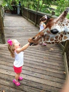 Some fun at the zoo. How many likes for this cute image ? Have you tried this site: http://pinterest.com/travelfoxcom/pins/