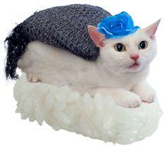 Nekozushi cat + sushi