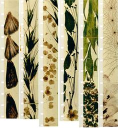 The Renegades: American Avant-Garde Film, — The Renegades: American Avant-Garde Film, Walker Art Center (image is film still from Mothlight by Stan Brakhage) Short Of The Week, Avant Garde Film, Filmstrip, Isle Of Dogs, Walker Art, Film Stills, Trees To Plant, Illusions, Images