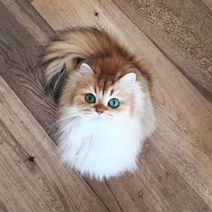 This cat looks like it's wearing eyeliner <333