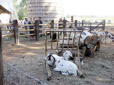 rustic farm venue with animals