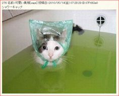 A cat in a bath wearing a shower cap…Water Bonnet?