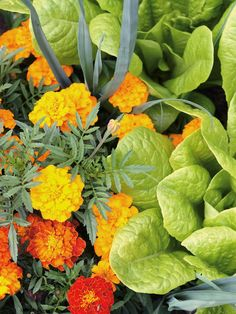 Increasing Your Property Value Through Applying This Landscaping Advice