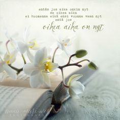 juliste-orkideat-west