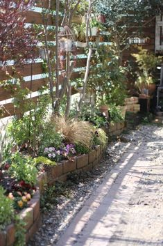 いつもの南側花壇のビオラやバラも暖かくなってきたので段々と成長を始めました。 本当に小さな花壇ですが南側で日当たりがよいため何でもよく育ちます。 でも...