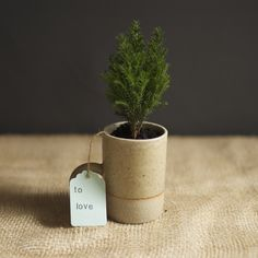 Mini Cypress Trees - Great holiday gift idea DIY