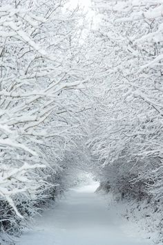 Winter wonderland snow tree tunnel