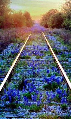 "railroad tracks gently being taken back by nature. beautiful "" railroad tracks gently being taken back by nature. Beautiful World, Beautiful Places, Beautiful Pictures, All Nature, Foto Art, Blue Bonnets, Train Tracks, Abandoned Places, Abandoned Train"