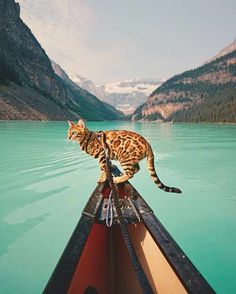 Click to see the traveling cat whose life is full of adventures.