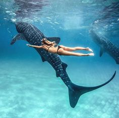 Swimming with whale sharks No matter how many photos I see of these guys, they still amaze me! Tag me in YOUR whale shark photos, would love to see them all Photo of taken by Underwater Photography, Travel Photography, Beauty Photography, Places To Travel, Places To Go, Swimming With Whale Sharks, Travel Aesthetic, Ocean Life, Marine Life