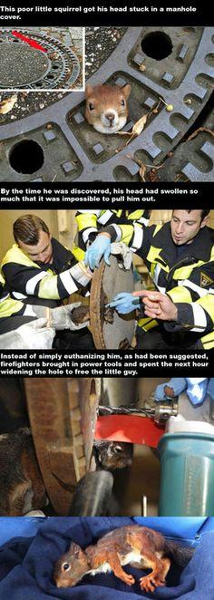 firemen rescue a trapped squirrel