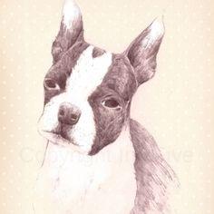 Hand drawn Boston Terrier
