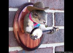 More weird taxidermy. I think my son would laugh at this, since the squirrels in our yard throw nut at his head.