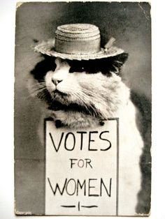 """fun history fact: a common argument against women voting was ads with cats dressed up as suffrage activists next to signs reading """"i demand a vote"""" etc, basically saying that if women can vote, who's next, cats? Women Suffragette, Oh The Humanity, 20th Century Women, Find Your Friends, Cool Hats, Women In History, History Facts, Beautiful Cats, Old Things"""