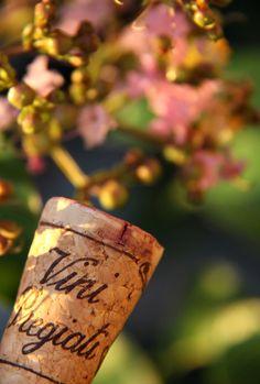 Precious wines.