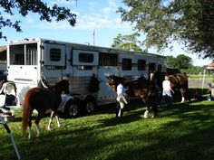 The Warricks maiden voyage to a Hunter Derby Event in South Florida with their new 4-Star Trailer from L.A. Trailer Sales! Good Luck!!!!!! (800) 350-0358