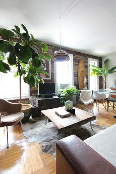 Joey and Antoni's Brooklyn Charmer - studio with fig and banana trees, pipe and wood shelving as room divider and dark grey wall