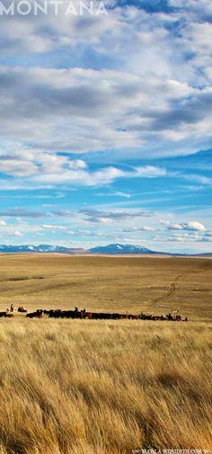 The Ranches at Belt Creek, Montana | http://FamilyFreshCooking.com #travel