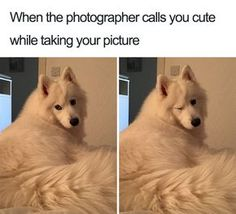 101 Best Funny Dog Memes to Make You Laugh All Day Mans's best friend. To celebrate dogs and the joy they give their owners, here are 101 of the best funny dog memes you'll find. Funny Animal Jokes, Funny Dog Memes, Cat Memes, Funny Husky, Funniest Memes, Cute Funny Dogs, Cute Funny Animals, Cute Baby Animals, Animals Dog