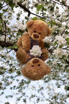 Teddy Bear Images, Teddy Bear Pictures, Teddy Bear Toys, Cute Teddy Bears, Butterfly Wallpaper Iphone, Bear Wallpaper, Teddy Day, Diy Flower Crown, Animated Love Images
