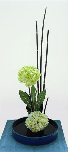 Ikebana Exhibition 5-14-14 By Janice Title: Blue By U Theme: Vertical Composition Materials: Hydrangea Fatsia Equisetum #Arreglosflorales