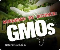 """Check out our special 10-part article series! We take a look at the top 10 """"scientific"""" threats to our lives. http://www.naturalnews.com/039778_evidence-based_science_murdered_GMO.html"""
