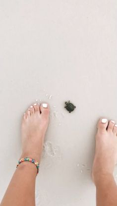 How to Take Good Beach Photos Cute Creatures, Beautiful Creatures, Animals Beautiful, Baby Sea Turtles, Cute Turtles, Cute Little Animals, Cute Funny Animals, Funny Lizards, Belle Photo