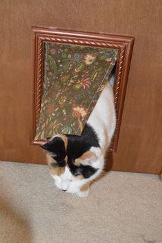 Creative CatDoor - See Molly Create - Molly Creates