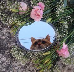 """MEOW - """"When will my reflection show, who I am inside?"""""""