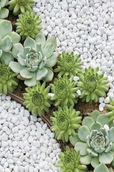 35 Best Cactus Landscaping Making Some Beauty Around It - Kaktus Succulents For Sale, Types Of Succulents, Succulents Garden, Succulent Rock Garden, Succulent Landscaping, Garden Landscaping, Residential Landscaping, Landscaping Ideas, Cool Plants