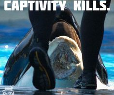 I hate seaworld with a deep passion
