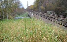 Au secours, Monsieur le Maire, des mauvaises herbes !.. :-D http://www.leparisien.fr/seine-et-marne-77/ozoir-saint-mammes-sans-pesticides-les-herbes-poussent-dans-les-gares-23-11-2015-5305117.php