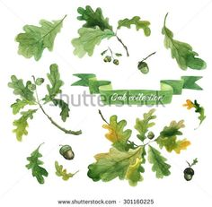 Watercolor oak leaves, branches and acorns. Hand drawn illustration. - stock photo