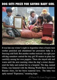 Dog Gets Prize For Saving Baby Girl